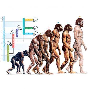 พัฒนาการมนุษย์จากอดีตสู่ปัจจุบัน